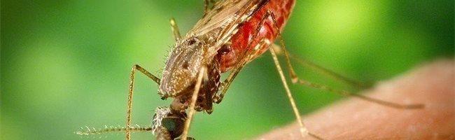 Qué es la malaria