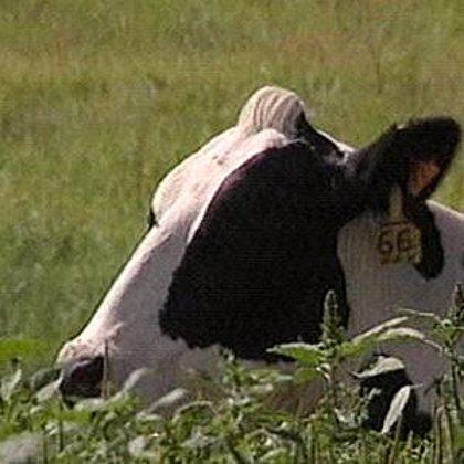 Desarrollan una posible terapia génica para el mal de las vacas locas