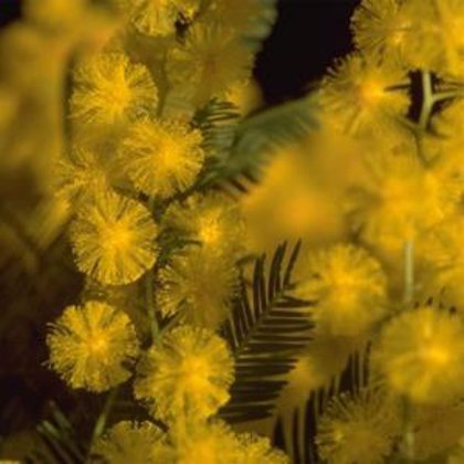 Las concentraciones de polen serán menores esta primavera