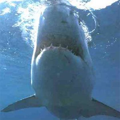 Un tiburón mata a un surfista en las costas del Pacífico mexicano