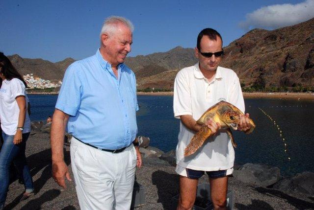 Las tortugas bobas fueron devueltas al mar