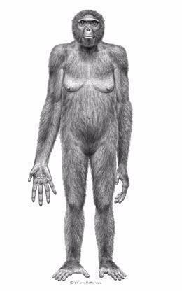 Ardiphitecus ramidus, ancestro homínido