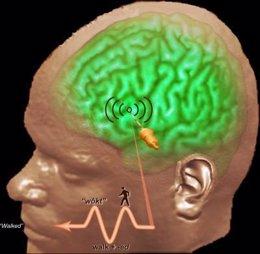 cerebro, pensamiento, lenguaje