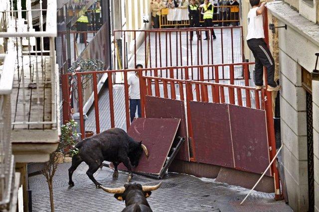 Un toro embiste contra una valla de seguridad durante el ensayo general el pasad