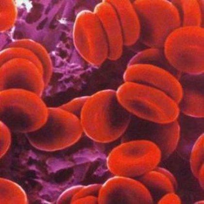 Producen glóbulos rojos sintéticos
