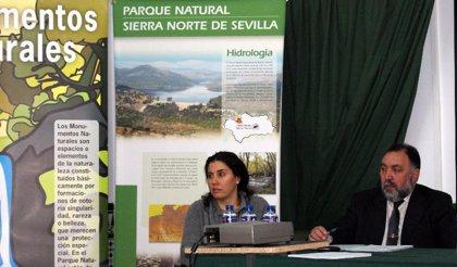 El Cerro del Hierro, Monumento Natural, será repoblado con especies autóctonas contra el eucalipto