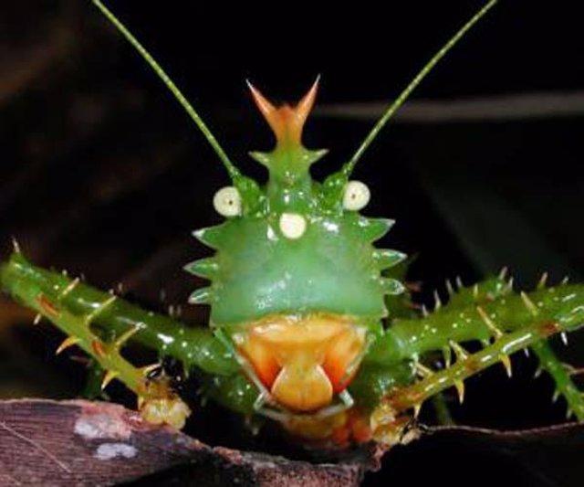 Insecto del Parque Nacional Yasuni