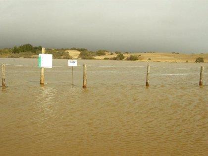Reserva Natural de Dunas de Maspalomas (Gran Canaria) creará plataformas elevadas para nidificación de aves en la Charca