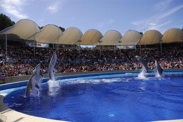 Una Exhibición De Delfines En El Zoo