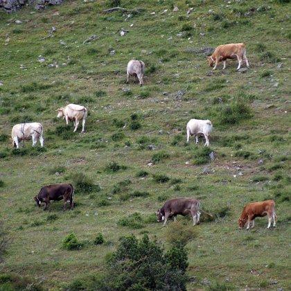 Agricultura y Desarrollo Rural convoca la contratación para las encuestas ganaderas 2010 en Extremadura