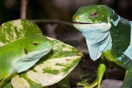 Se pierden especies a un ritmo entre cien y mil veces superior a lo normal