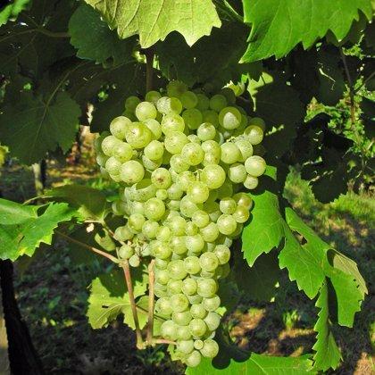 Almendralejo (Badajoz) será la sede de una misión comercial inversa de importadores de vino de los países nórdicos