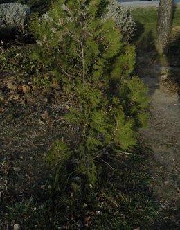 Arbustos.