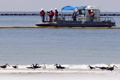 La marea negra alcanza la costa de Luisiana
