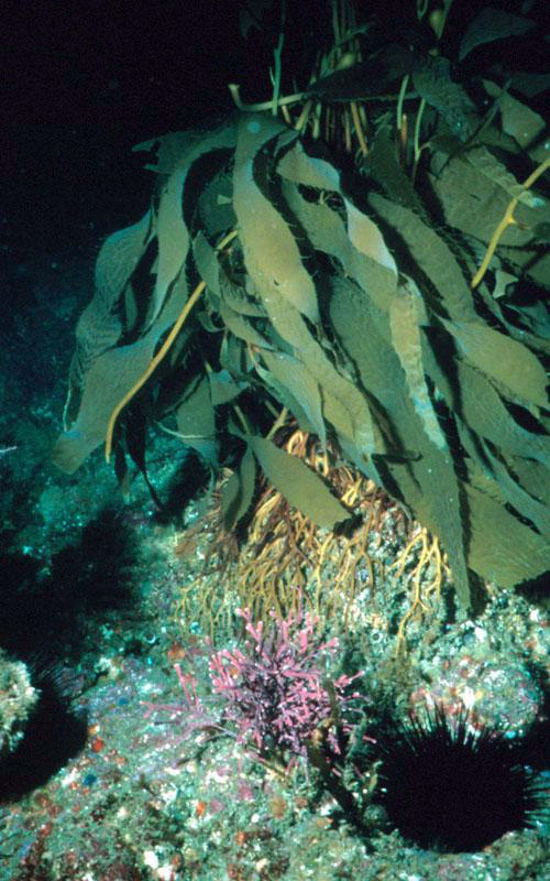 Unas extrañas algas tóxicas causan enfermedades de la piel