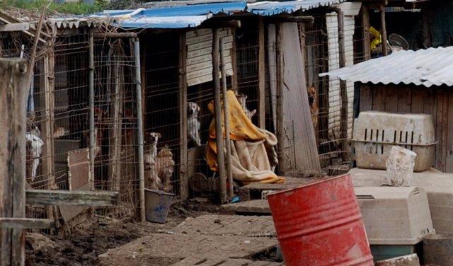 Polémica instalación en la que viven perros en Avilés.