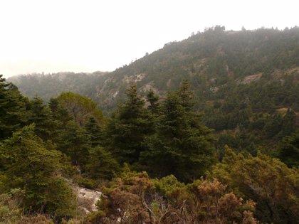 Visitantes del Parque Natural Sierra de las Nieves lamentan no poder comprar en estos pueblos en fin de semana