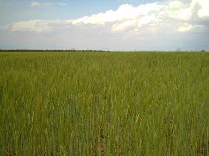APAG advierte que la cosecha de cereal en 2010 será entre un 15 y 20% inferior y se perderán unos 22 millones