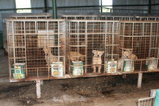 Los perros rescatados