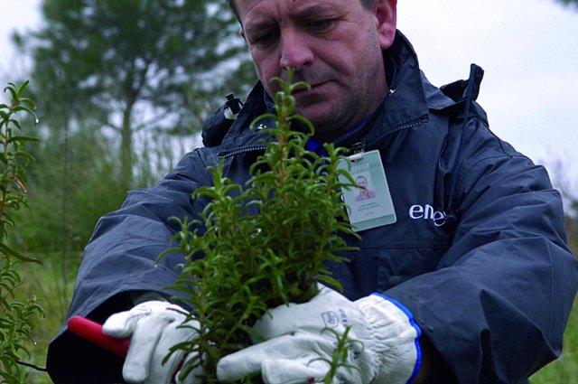 Un operario de Enresa recoge muestras de plantas en El Cabril
