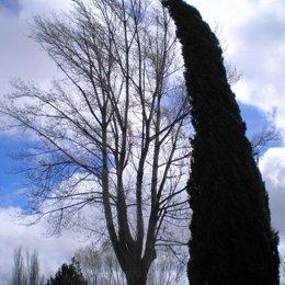 arboles se mueven por la fuerza del viento