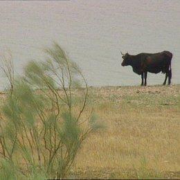 toro embalse reserva bastante agua recursos