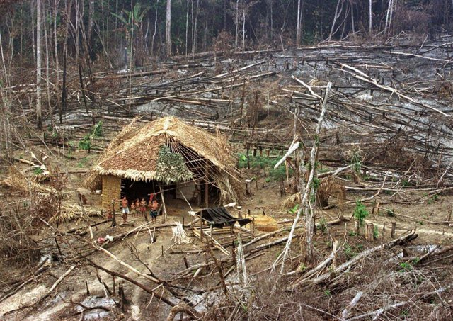 Familia de aborígenes en medio de un proceso de deforestación