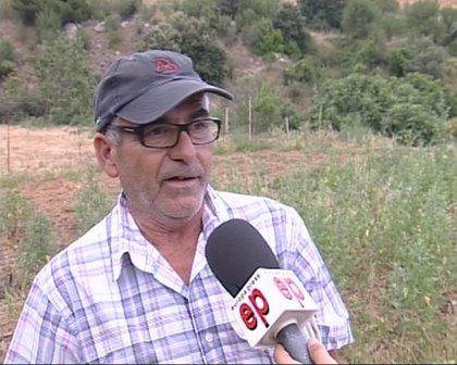Jabalíes arrasan las cosechas de los agricultores del barrio del Canyet de Badalona