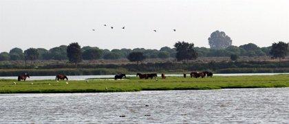 """La Unesco estudia la quejas de dos colectivos sobre la """"grave"""" situación de Doñana"""