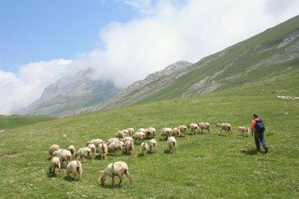 Los pagos con cargo a los fondos europeos agrícolas Feaga y Feder suman hasta junio 56,4 millones