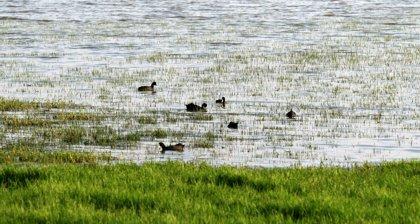 Oceana pide protección para el mar de Doñana
