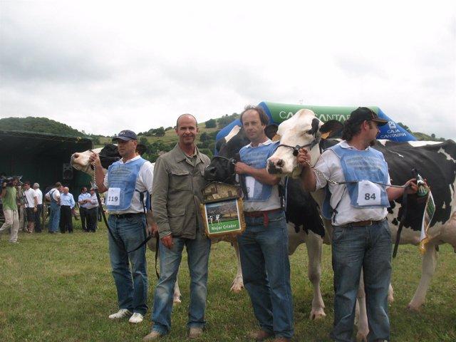 Concurso de ganado frisón