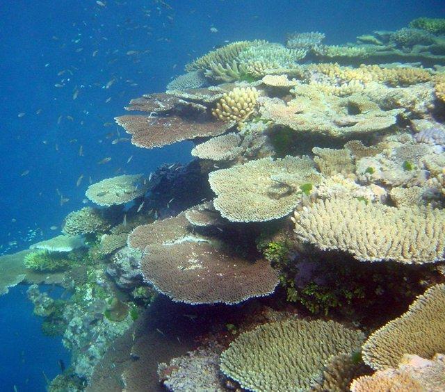 Coral sano