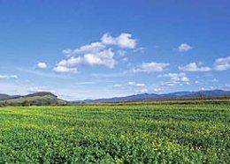 Navarra es la comunidad que más usa los fertilizantes inorgánicos.