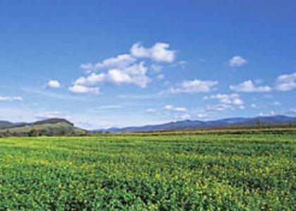 Navarra es la comunidad con mayor uso de fertilizantes inorgánicos en la agricultura