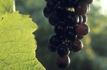 Bodegas Santalba logra un antioxidante natural beneficioso para la salud a través de un proyecto de I+D+I