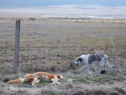 El mito del abandono de mascotas en verano