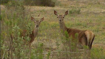 Se eleva a 79 el número de ciervos muertos en la sierra de la Culebra (Zamora)