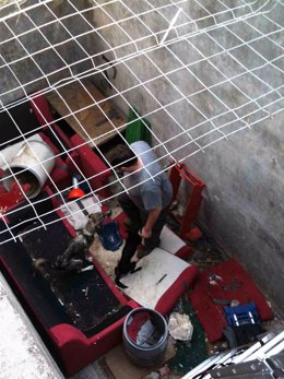 Perros abandonados en una balsa