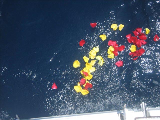 Pétalos en el mar tras depositar una urna funeraria