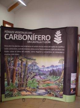 La exposición 'Fósiles vegetales del carbonífero'.
