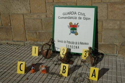Detenido un vecino de Carreño por colocar cepos de caza en un monte público