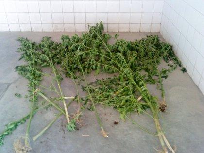 Dos detenidos en Quintanilla (Valladolid) por tráfico de drogas tras intervenirles éxtasis, 'speed' y dinero