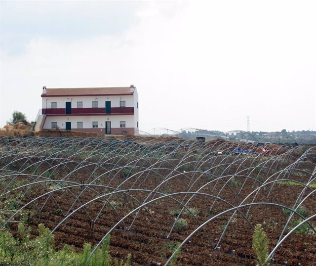 Una plantación en Huelva