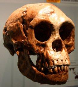 Homo Florisiensis
