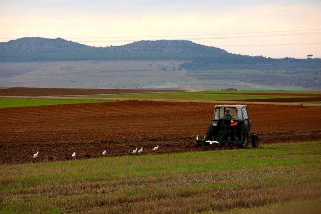 Agricultor, tractor, campo