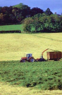 Tractor, campo