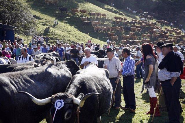 Revilla en la feria de ganado de Puentenansa