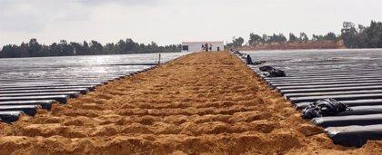 La plantación de la fresa comienza en gran parte de la provincia la semana próxima