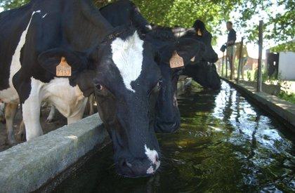 Las indemnizaciones por campañas de saneamiento en ganado bovino suman casi 375.000 euros hasta agosto